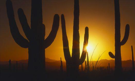 cropped-saguaros.jpg