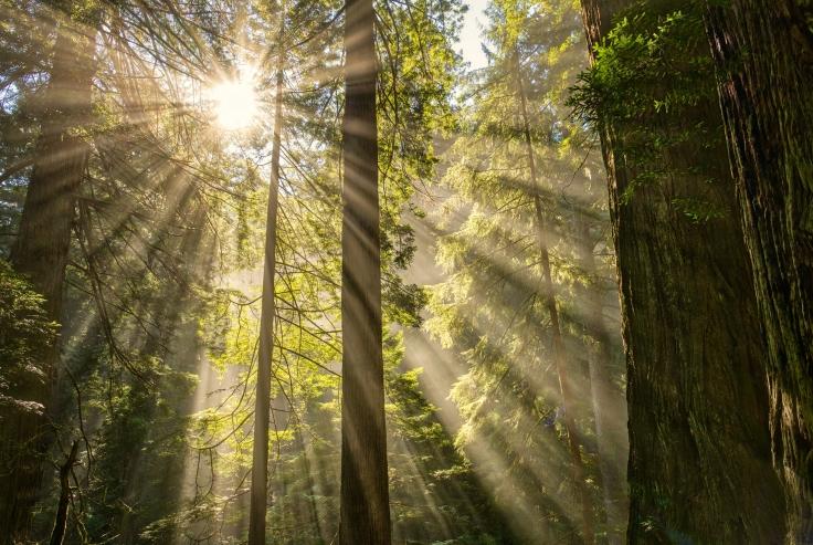 Redwoods horizontal72