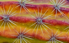 orangcactus