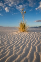 White Sands, NM. Bosque Del Apache.