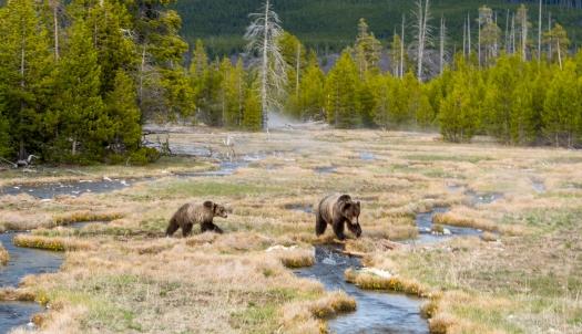 Glenn Yellowstone spring_0991