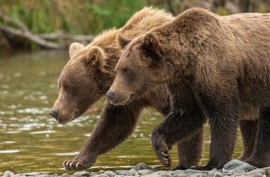 Katmai National Park, Alaska.