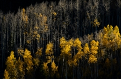 Crested Butte, CO. fall colors.